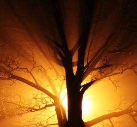 TreeSun
